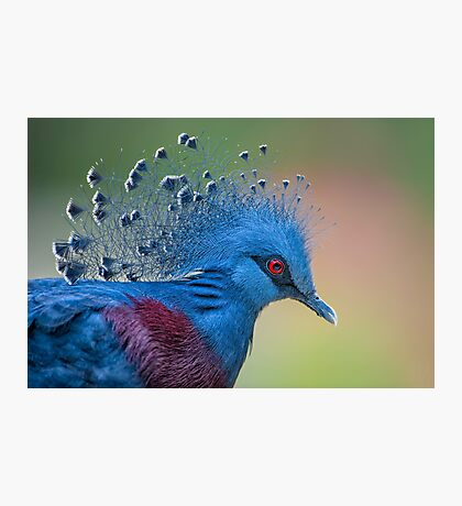 Well Crowned Photographic Print
