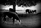 Cow & Calf by Chris Goodwin