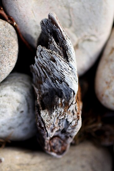 Pebbles and Drift Wood by timkirman