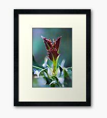 Day 314 - 19th May 2012 Framed Print