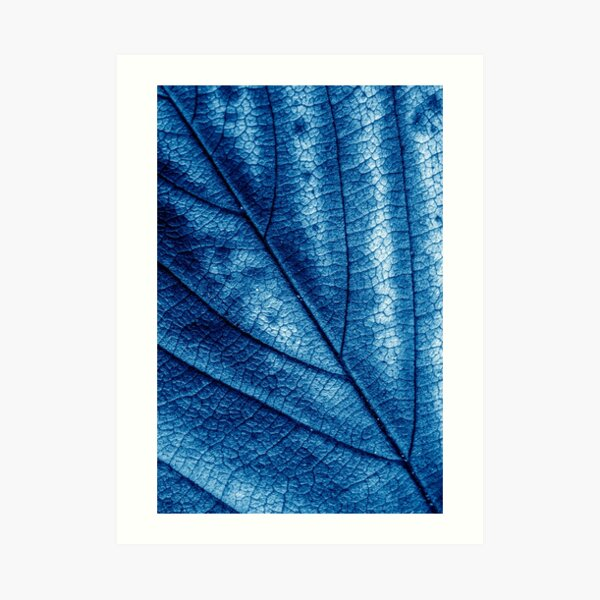 Pretty Blue Autumn Leaf Abstract Photography Art Print