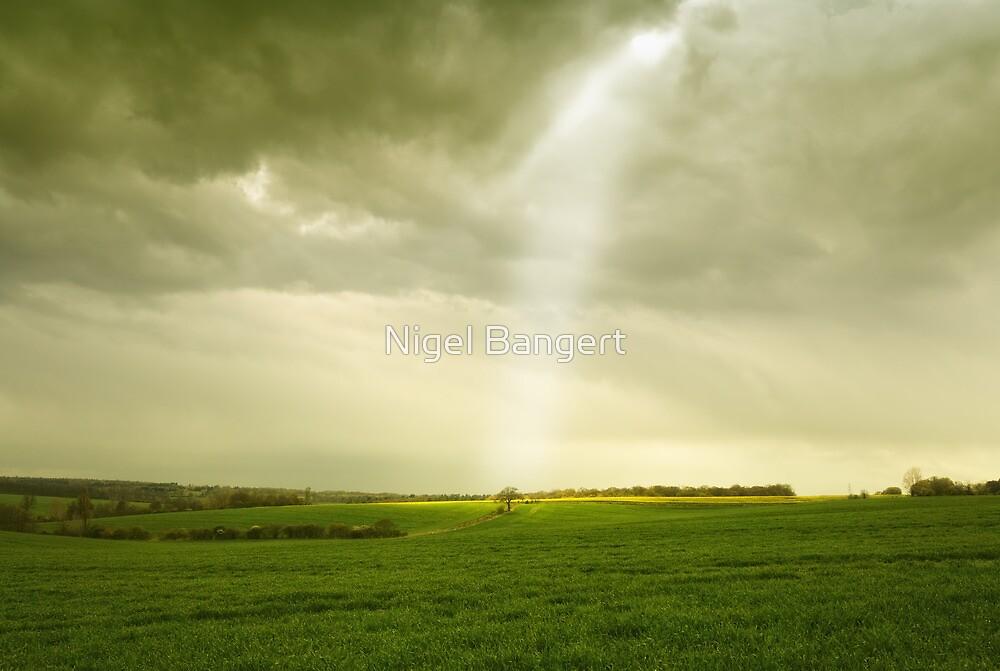 Ray of Light by Nigel Bangert