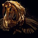 Lingcod Skeleton by phil decocco
