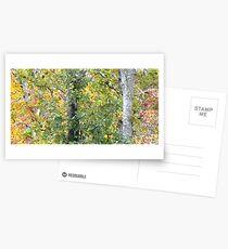 Foilage Postcards