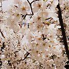 Flowering Tree by EmilyDawn