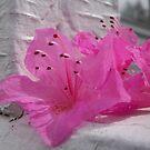 Pretty Pink by EmilyDawn
