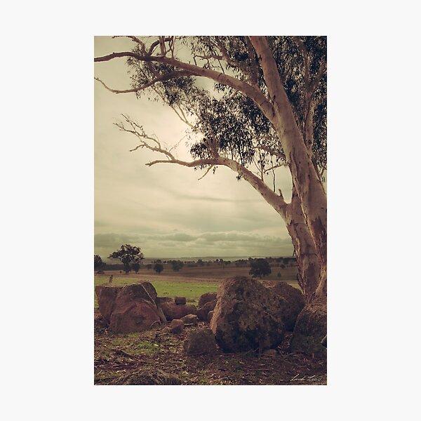 Eldorado Gumtree Photographic Print