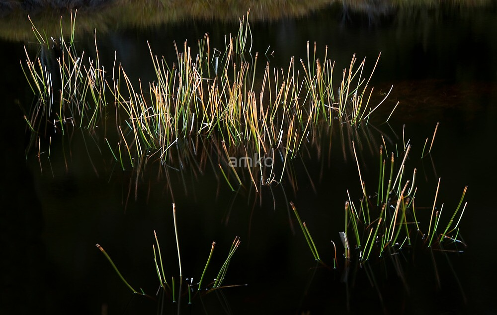 Reed Pool by amko
