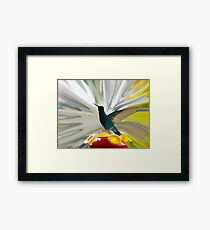 Hummingbird Series VII Framed Print