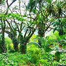 Lush Tropical Greenery by kenspics