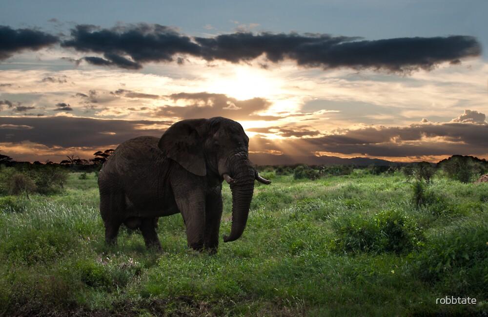 KENYA - Amboseli Game Reserve by robbtate