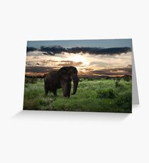 KENYA - Amboseli Game Reserve Greeting Card