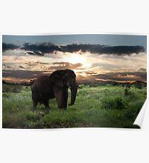 KENYA - Amboseli Game Reserve Poster