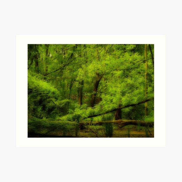 Lush and green Art Print