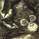 baby orangutan by jashumbert