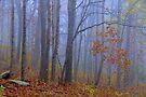 Autumn Blues by NatureGreeting Cards ©ccwri