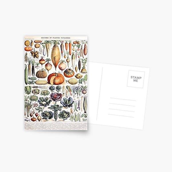 Adolphe Millot - Légumes et Plantes Potagères - French vintage poster Postcard