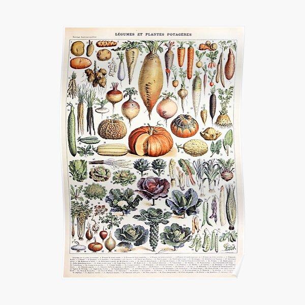 Adolphe Millot - Légumes et Plantes Potagères - French vintage poster Poster