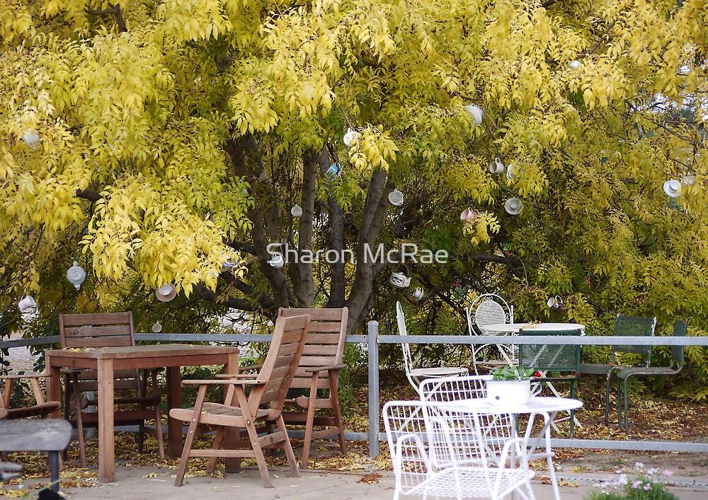 Australian Tee(Tea) Tree by SharonD
