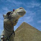 Camel Shot by KerryPurnell