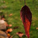 Autumn by Russell Jenkins