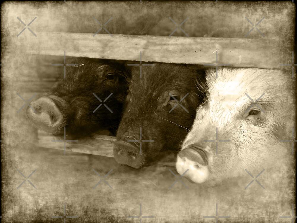 3 little pigs by gruntpig