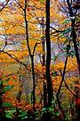 Rainy Days by NatureGreeting Cards ©ccwri