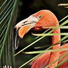 Flamingo Time by Kathy Baccari