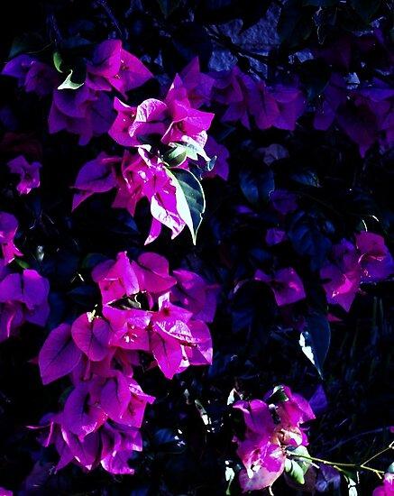 Color me Purple by Robin Monroe