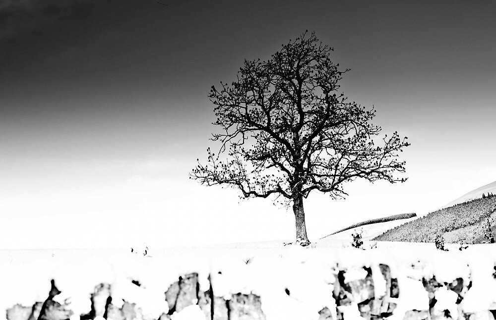 Tree in the Snow, Southern Upland Way, Scottish Borders by Iain MacLean