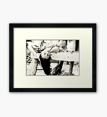 Caribbean Girl 03 Framed Print