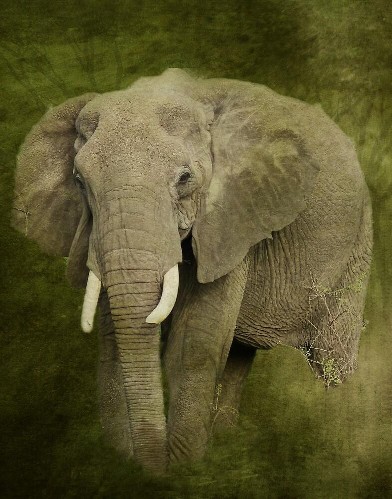 Elephant Spirit by Linda Sparks