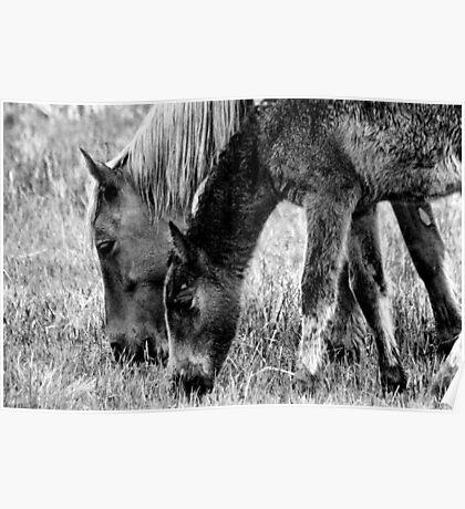 Wild Horses 1 Poster