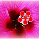 Hibiskus by KatarinaD