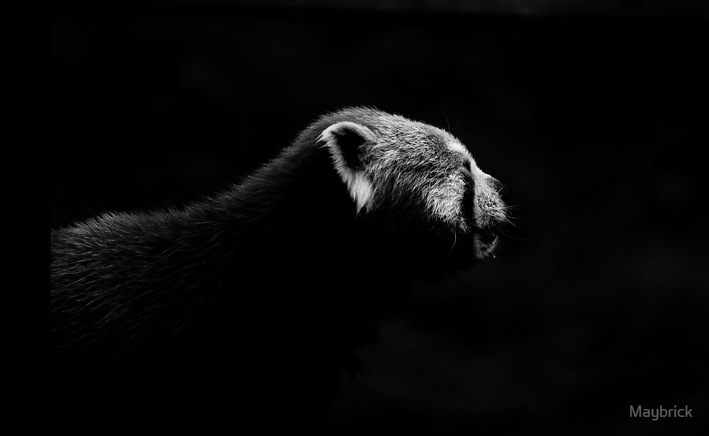 Red Panda, Mysterious and Monochrome. by Maybrick