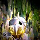Iris radiance by Margherita Bientinesi
