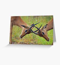Locking horns Greeting Card