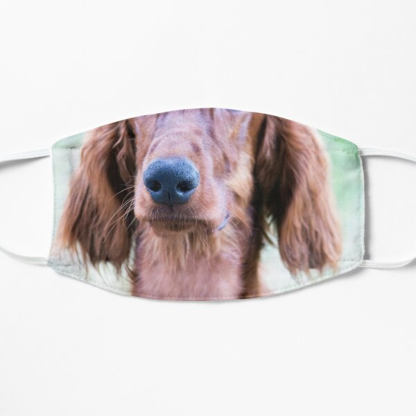 Viento perro cuello banda Celtic Heart cuello para perro banda Dog Collar viento perro Greyhound galgo