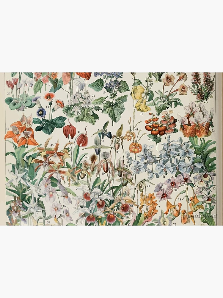 Adolphe Millot fleurs D by wetdryvac