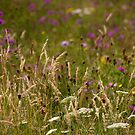 wildflowers by picketty