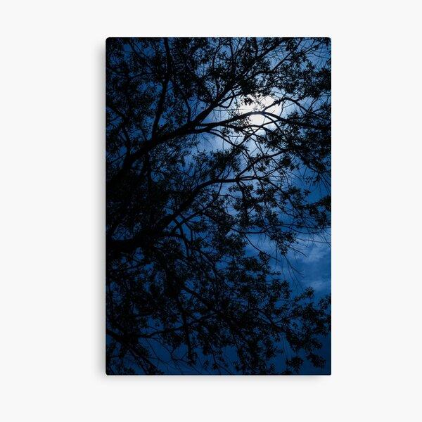 Blue Caress of Feel Canvas Print