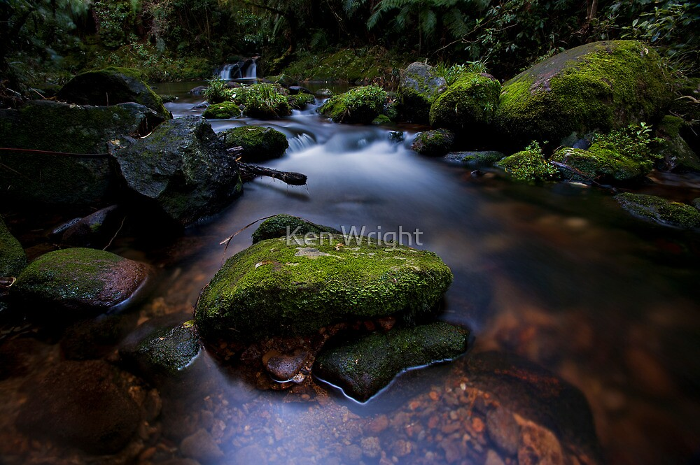 Old Kaimai stream moss by Ken Wright