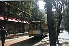 Cable Car On Sunny Tree Lined Street in S.F by RobynLee