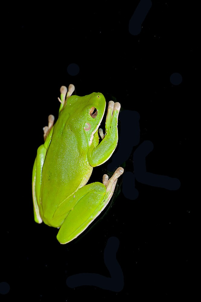 Froggie in the dark  by Jenny Dean