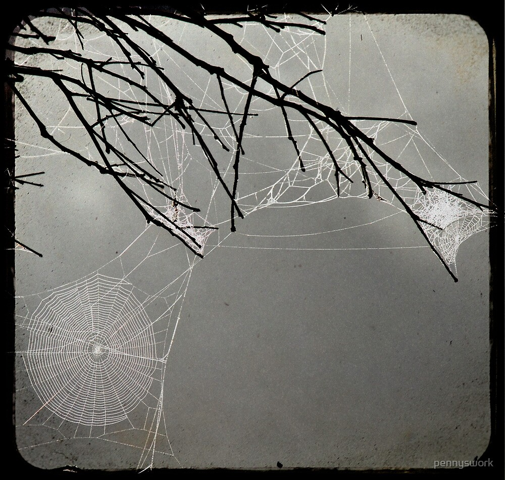 The Spiders Web by pennyswork