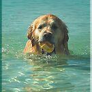 Goldie plus water plus toy - heaven! by Winksy