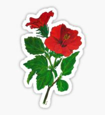 A Tropical Red Hibiscus Flower Isolated Sticker