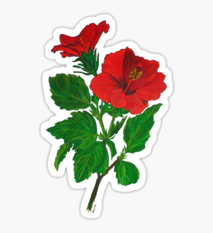 A Red Hibiscus Flower Isolated On White Background Sticker