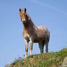 Carli's Horse (5857) by Raymond Kerr