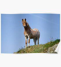 Carli's Horse (5857) Poster